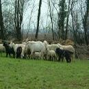 Assicurazione agevolata contro malattie bestiame strutture aziendali e sottostanti colture anno 2014