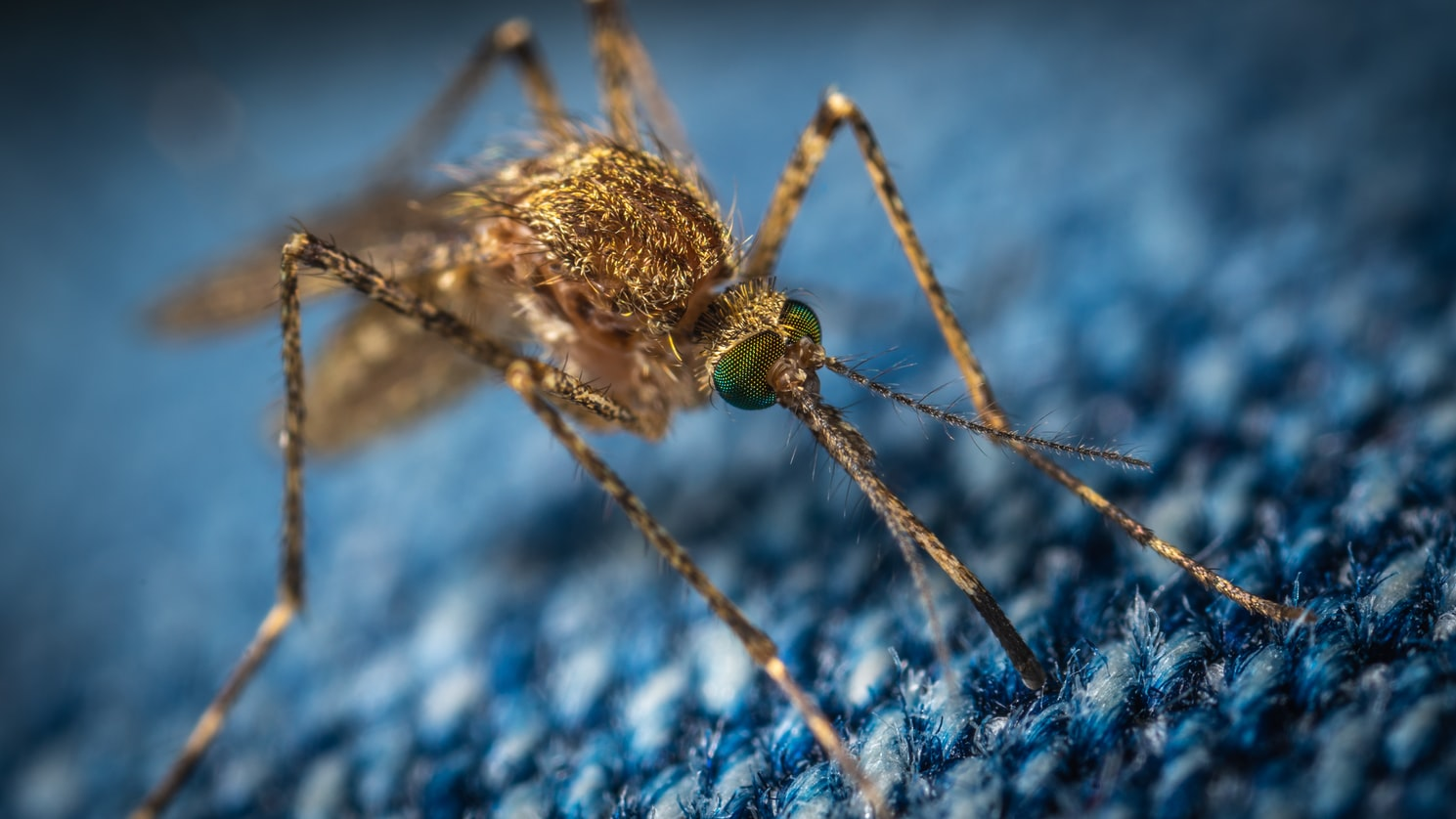 Emergenza Zanzare – Prevenzione Virus West Nile